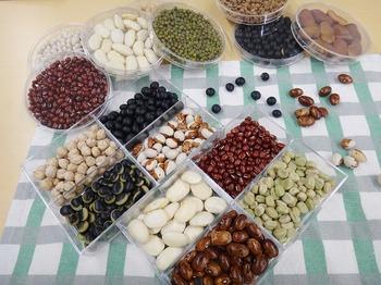 5.12食育豆.jpg
